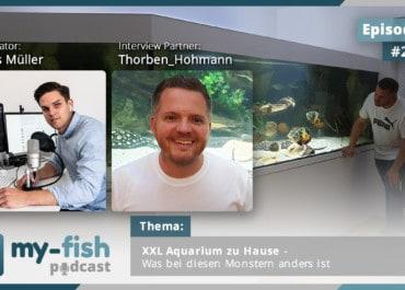 Podcast Episode #221: XXL Aquarium zu Hause - Was bei diesen Monstern anders ist (Thorben Hohmann)