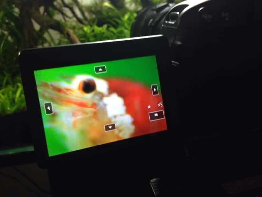 226: Regelmäßige Arbeiten im Aquarium - So einfach geht's 30