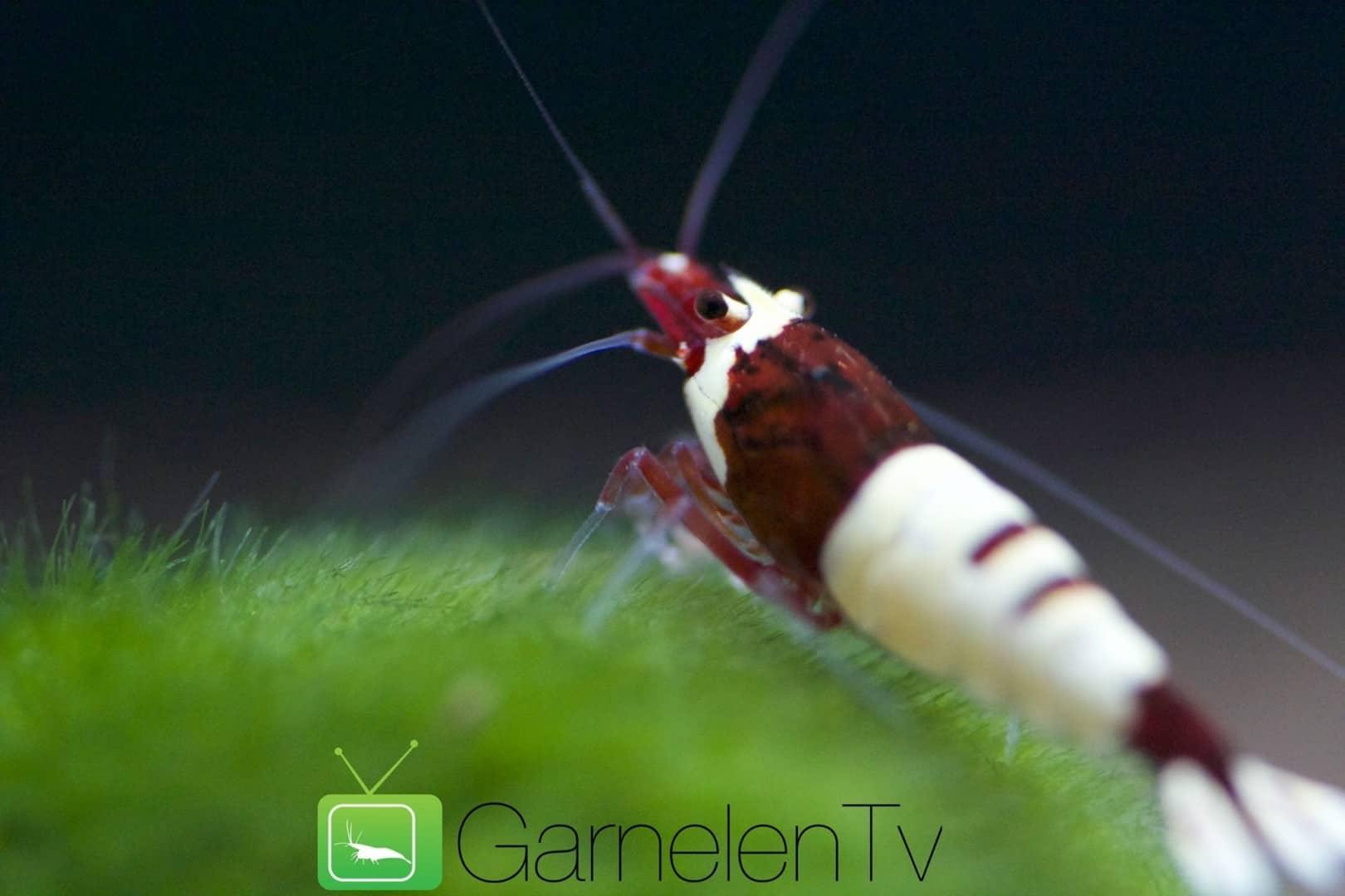 226: Regelmäßige Arbeiten im Aquarium - So einfach geht's 4