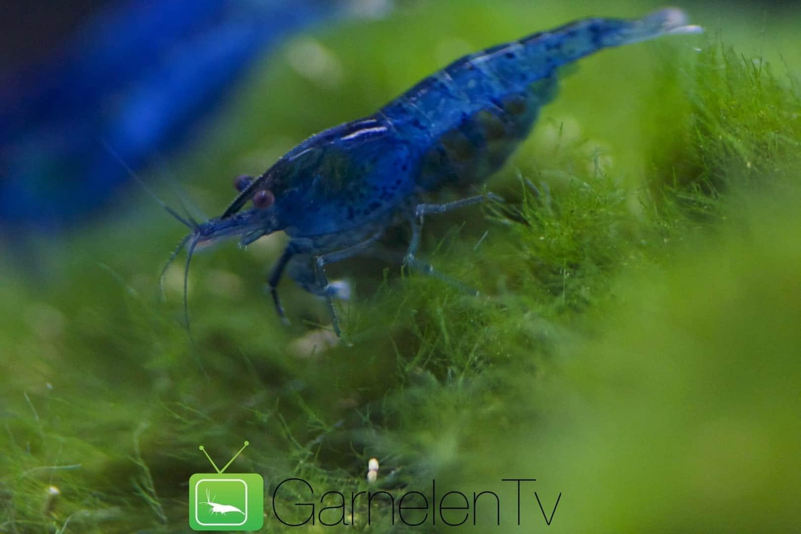 226: Regelmäßige Arbeiten im Aquarium - So einfach geht's 18