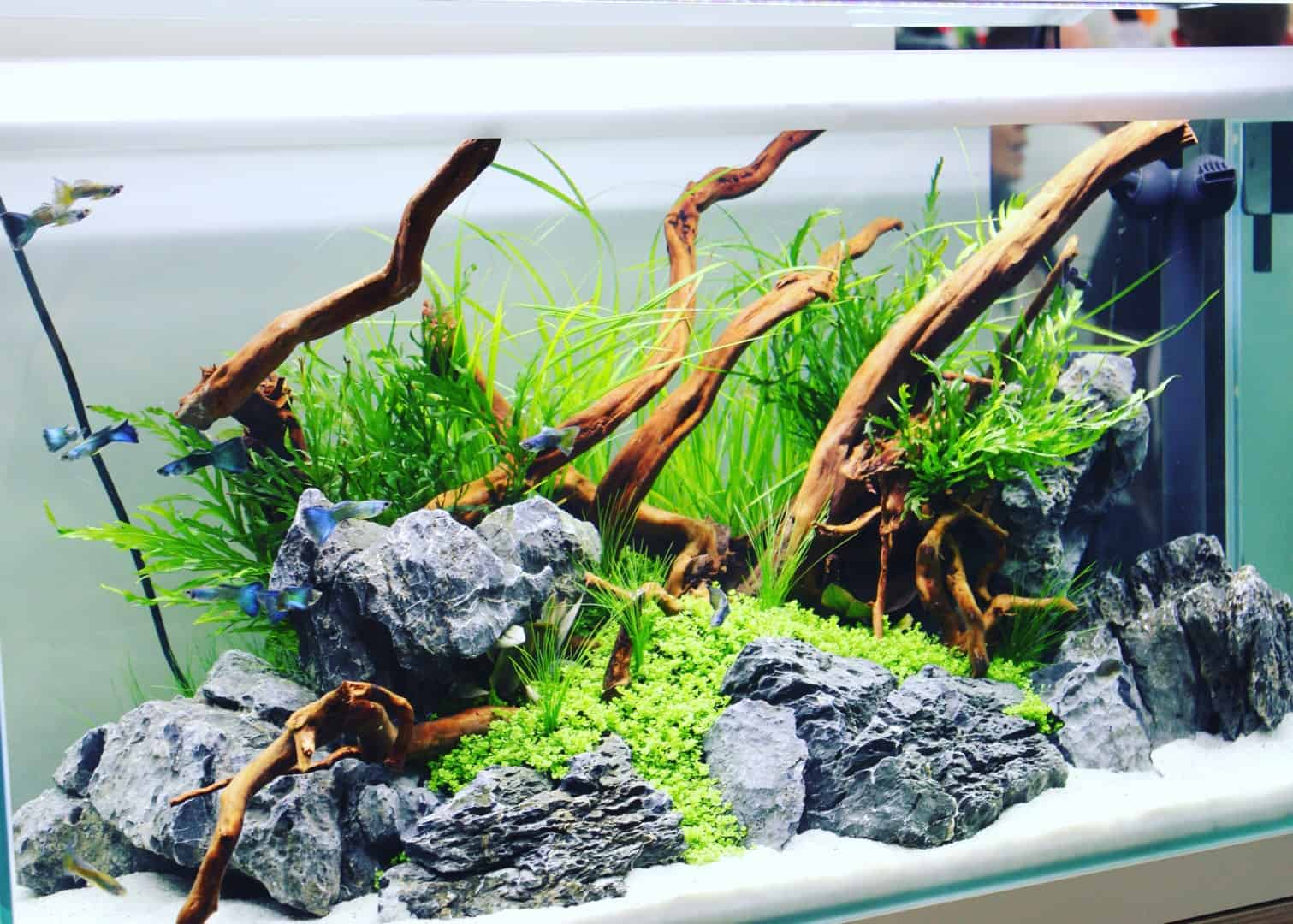 226: Regelmäßige Arbeiten im Aquarium - So einfach geht's 21