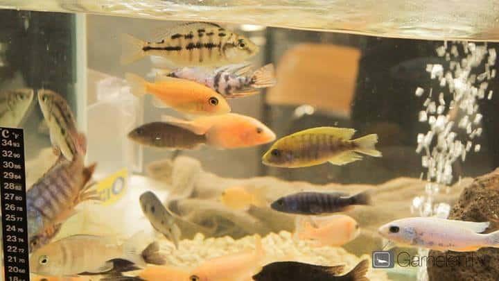 226: Regelmäßige Arbeiten im Aquarium - So einfach geht's 26