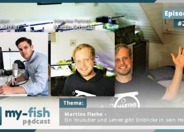 Podcast Episode #224: Martins Fische - Ein Youtuber und Lehrer gibt Einblicke in sein Hobby (Martin Schmidt)