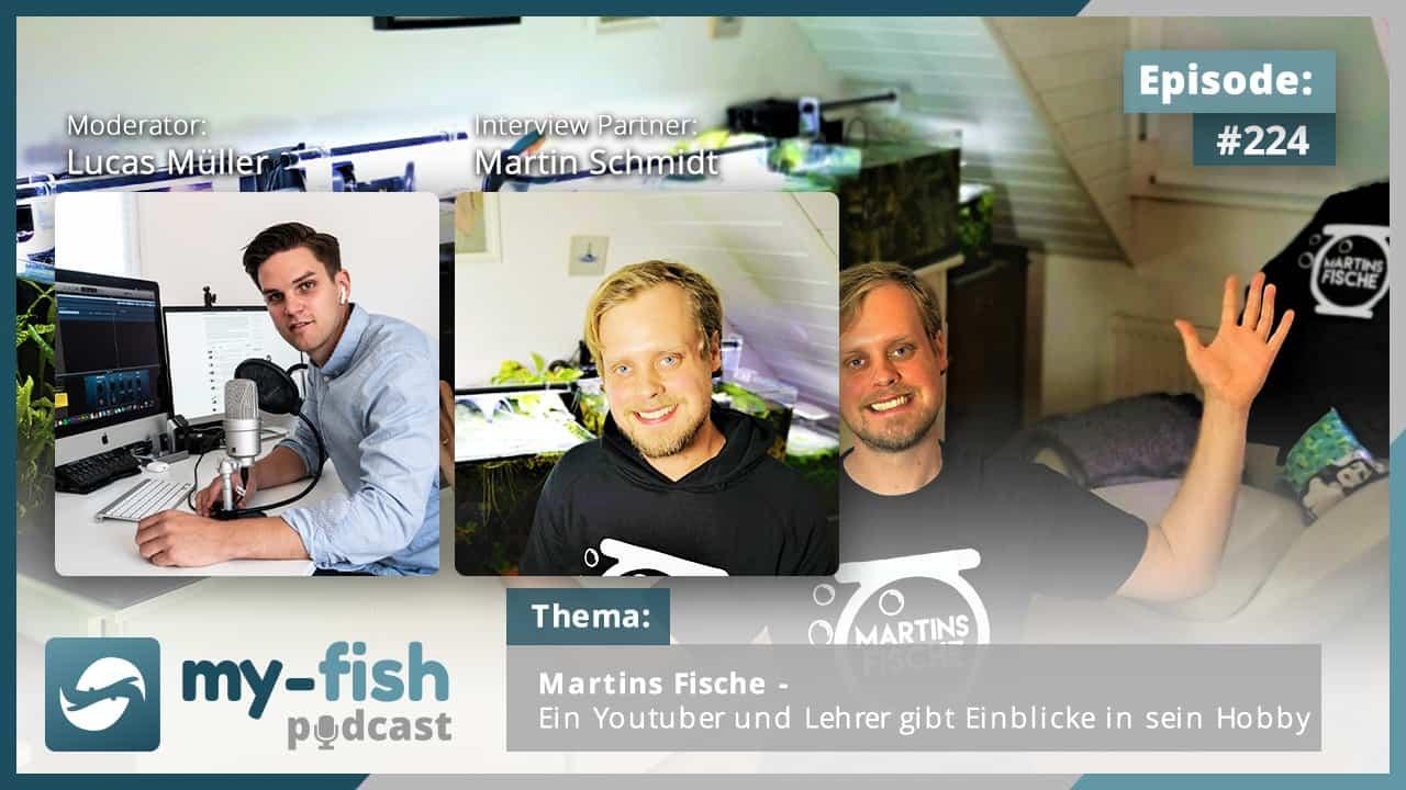224: Martins Fische - Ein Youtuber und Lehrer gibt Einblicke in sein Hobby (Martin Schmidt) 1