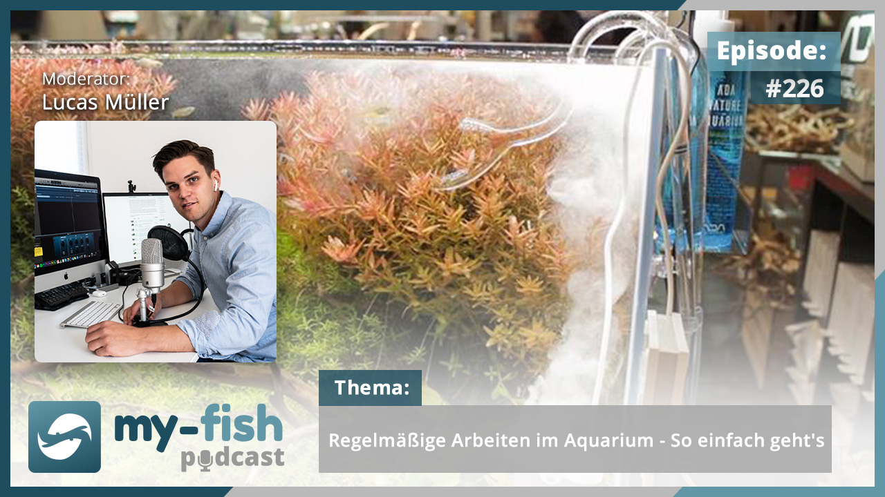 226: Regelmäßige Arbeiten im Aquarium - So einfach geht's 1