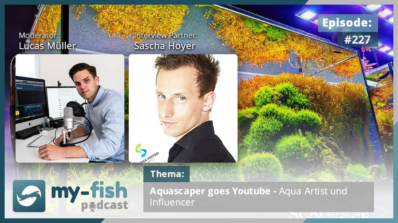 227: Aquascaper goes Youtube - Aqua Artist und Influencer (Sascha Hoyer) 1