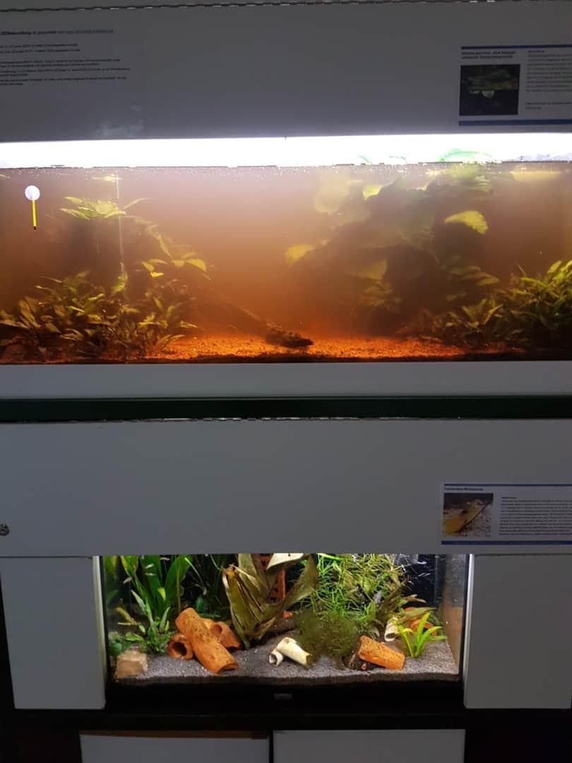 230: Cooler Aquaristikteenie - Fische begeistern auch junge Menschen und verbindet (Aron) 2