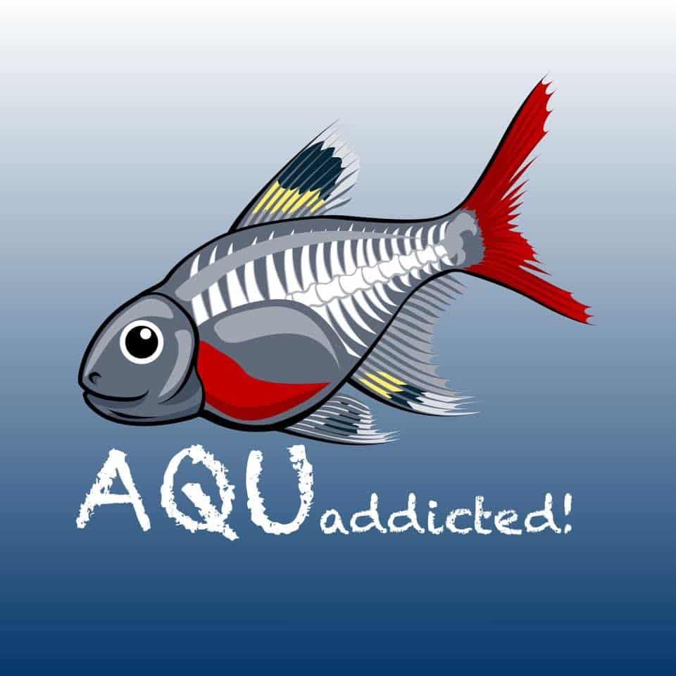229: AQUaddicted! stellt sich vor - Zwei Aquaristikprofis mit Herz und Verstand (Kevin Höhlein und Andre Peukert) 2