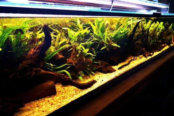 228: Fische im Aquarium züchten - Tipps zur gezielten Vermehrung (Martin Schmidt) 2