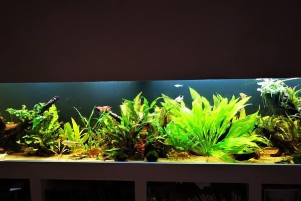 228: Fische im Aquarium züchten - Tipps zur gezielten Vermehrung (Martin Schmidt) 3