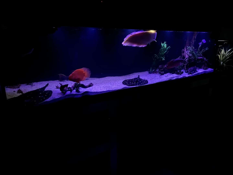 231: German Monstertank - Große XXL Fische und deren Vergesellschaftung (Cedric Falk) 10