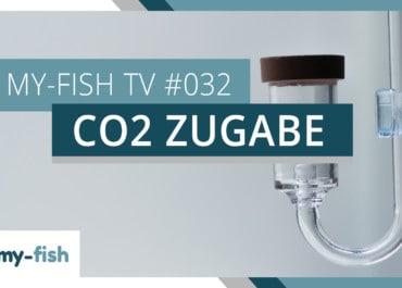 my-fish TV: Wie kommt das CO2 ins Aquarium?