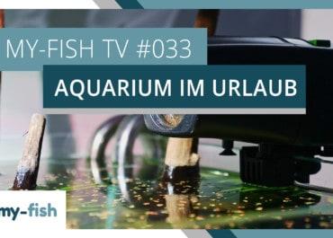 my-fish TV: 10 Tipps um Aquarien im Urlaub zu versorgen