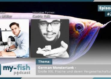 Podcast Episode #231: German Monstertank - Große XXL Fische und deren Vergesellschaftung (Cedric Falk)