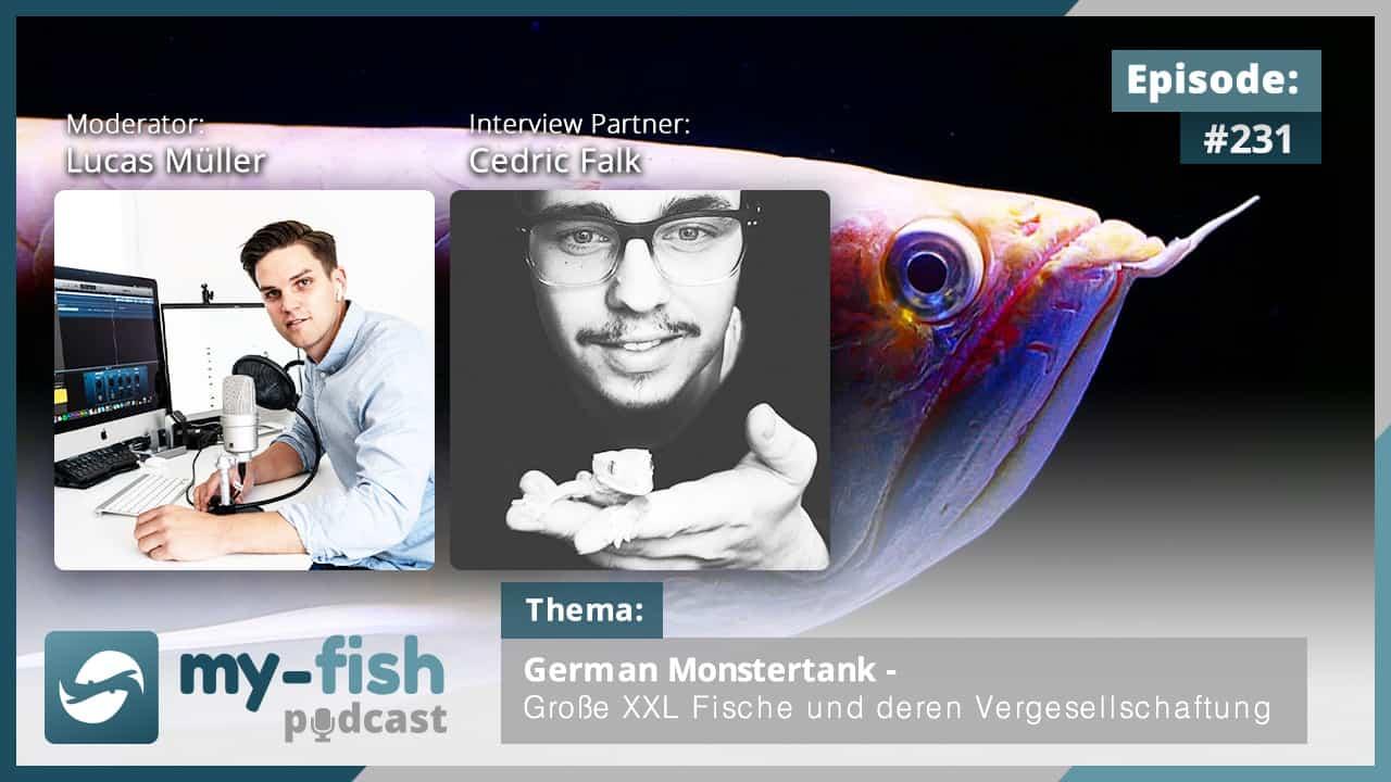 231: German Monstertank - Große XXL Fische und deren Vergesellschaftung (Cedric Falk) 1