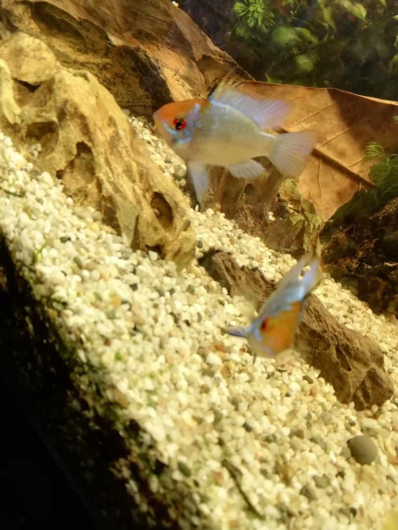 232: Gillians Unterwasserwelt und ihre bunten Garnelen (Gilian) 5