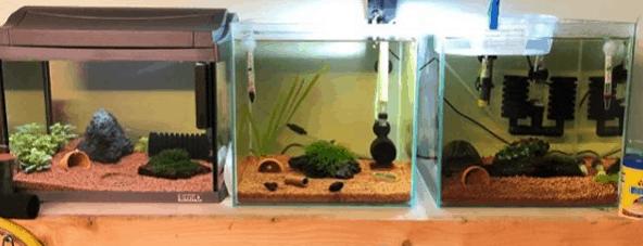 233: Shrimp Brother - Die Aquaristik eines Schülers (Ömer) 4