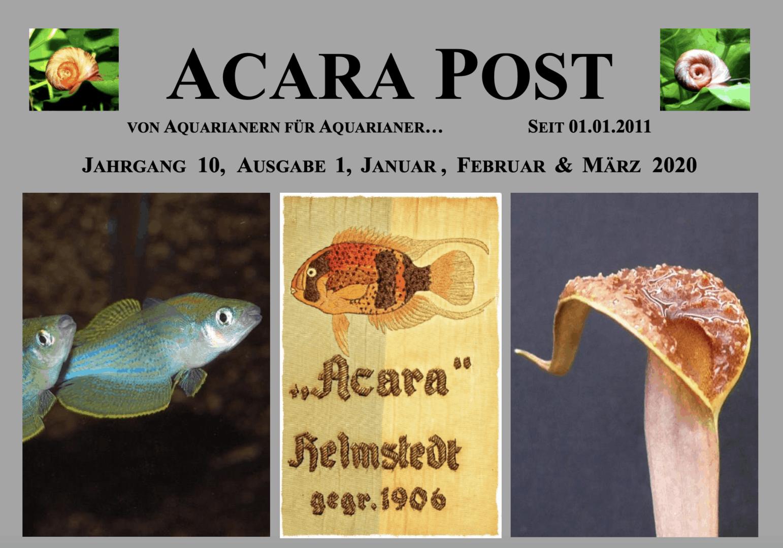 Acara-Post Januar - März 2020 - jetzt kostenlos lesen 1