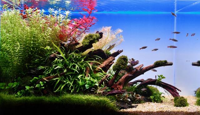 234: Aquascaping für Beginner - Tipps vom Einsteiger (Louis) 2
