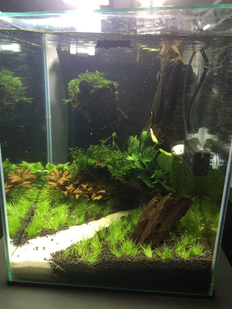 235: Wie viel kostet ein Aquarium? Budget für Anschaffung und Unterhaltung eines Aquariums 7