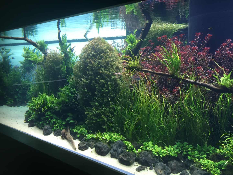 235: Wie viel kostet ein Aquarium? Budget für Anschaffung und Unterhaltung eines Aquariums 8