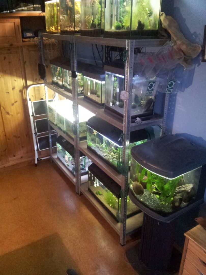 235: Wie viel kostet ein Aquarium? Budget für Anschaffung und Unterhaltung eines Aquariums 19