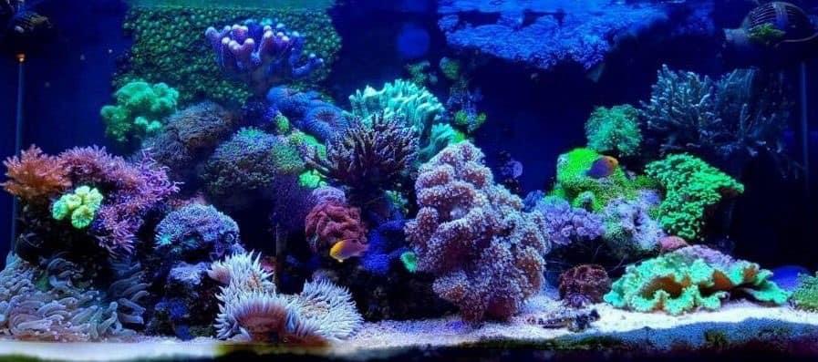 235: Wie viel kostet ein Aquarium? Budget für Anschaffung und Unterhaltung eines Aquariums 11