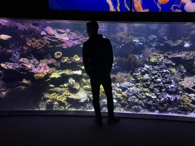 235: Wie viel kostet ein Aquarium? Budget für Anschaffung und Unterhaltung eines Aquariums 14