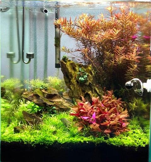 234: Aquascaping für Beginner - Tipps vom Einsteiger (Louis) 4