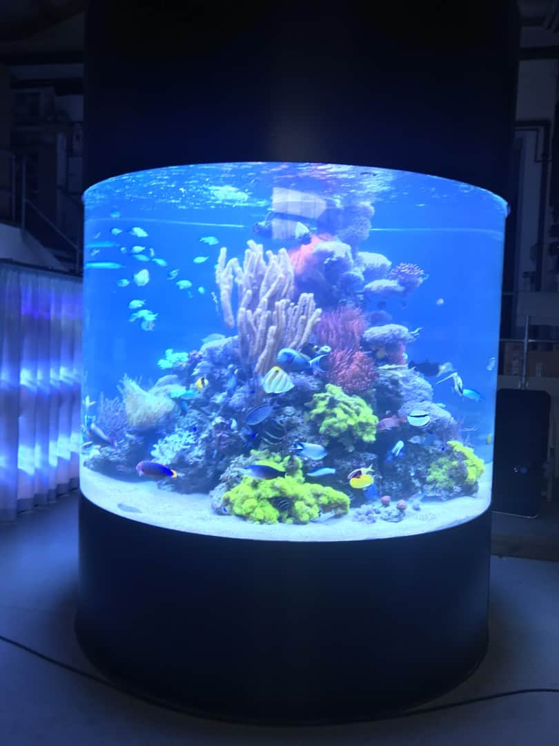 235: Wie viel kostet ein Aquarium? Budget für Anschaffung und Unterhaltung eines Aquariums 17