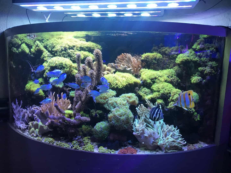 235: Wie viel kostet ein Aquarium? Budget für Anschaffung und Unterhaltung eines Aquariums 18