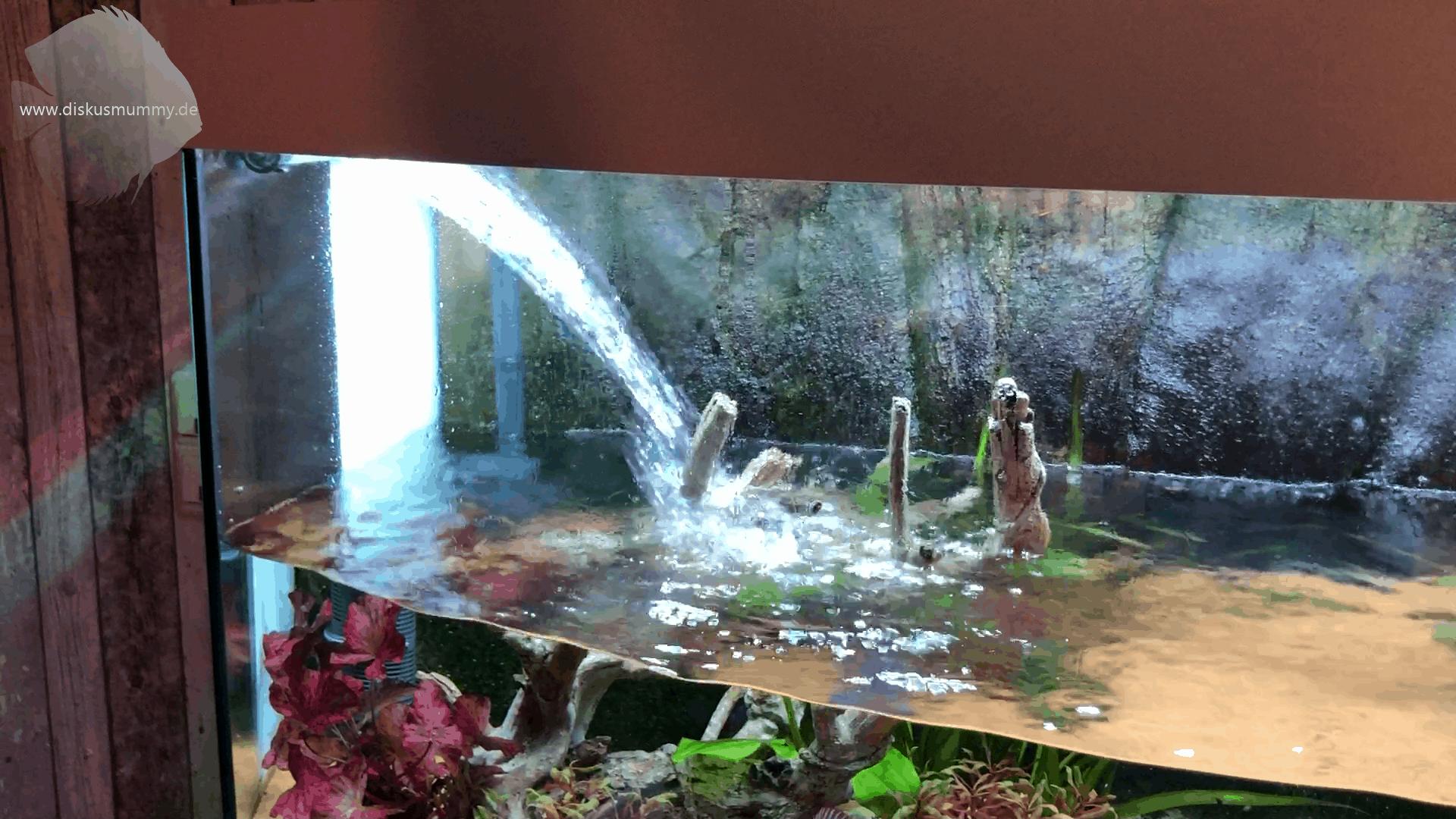 Wasserwechsel einmal anders! 6