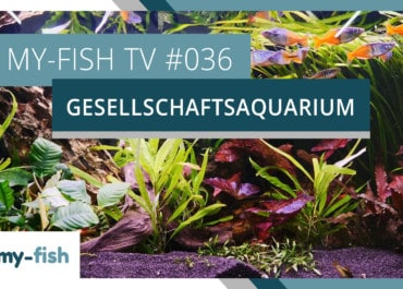 my-fish TV: Das Gesellschaftsaquarium