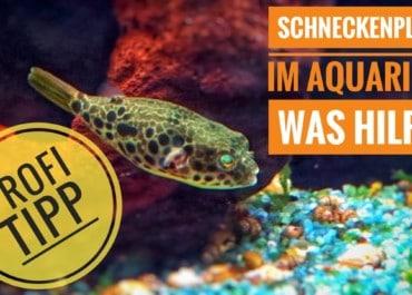 AQUaddicted! - Video Tipp: Zu viele Schnecken im Aquarium. Was Hilft?!