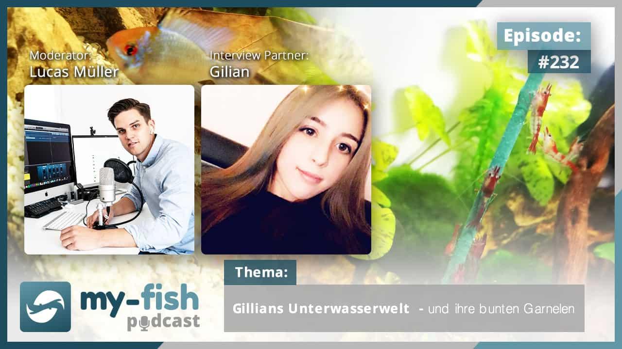 232: Gillians Unterwasserwelt und ihre bunten Garnelen (Gilian)