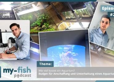 Podcast Episode #235: Wie viel kostet ein Aquarium? Budget für Anschaffung und Unterhaltung eines Aquariums