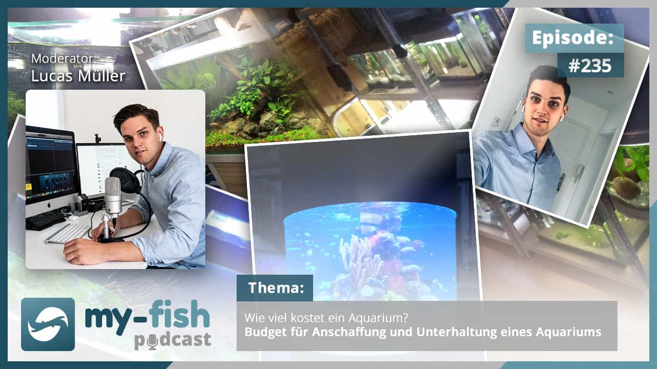 235: Wie viel kostet ein Aquarium? Budget für Anschaffung und Unterhaltung eines Aquariums