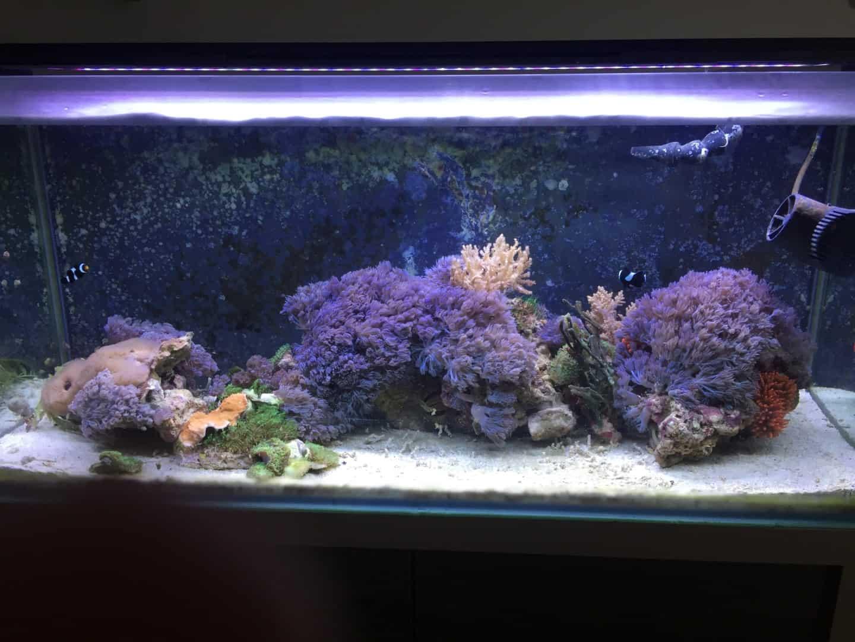 237: Stromverbrauch im Aquarium - So senkst du die Stromkosten 9
