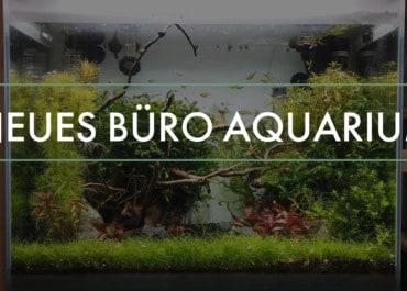 GarnelenTv: Aquarium im Büro