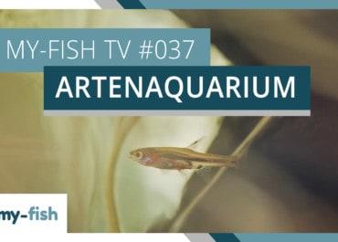 my-fish TV: Das Artenaquarium