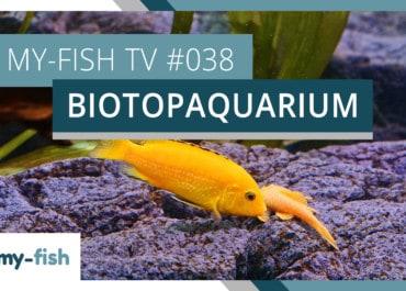 my-fish TV: Das Biotopaquarium