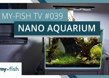 my-fish TV: Das Nanoaquarium