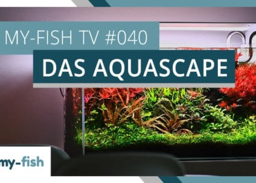 my-fish TV: Das Aquascape