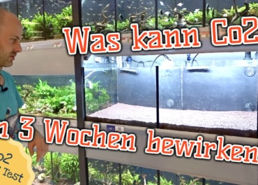 AQUaddicted! - Video Tipp: Das CO2 Vergleichsaquarium