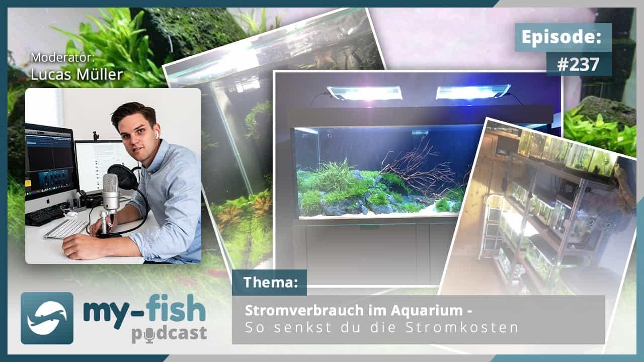 237: Stromverbrauch im Aquarium - So senkst du die Stromkosten 1