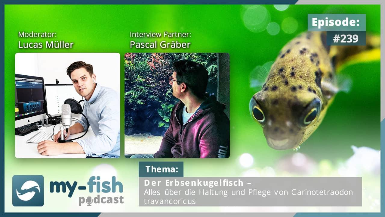 274: Der my-fish Podcast Jahresrückblick 2020 - 45 Episoden mit interessanten Personen aus der Aquaristik 34