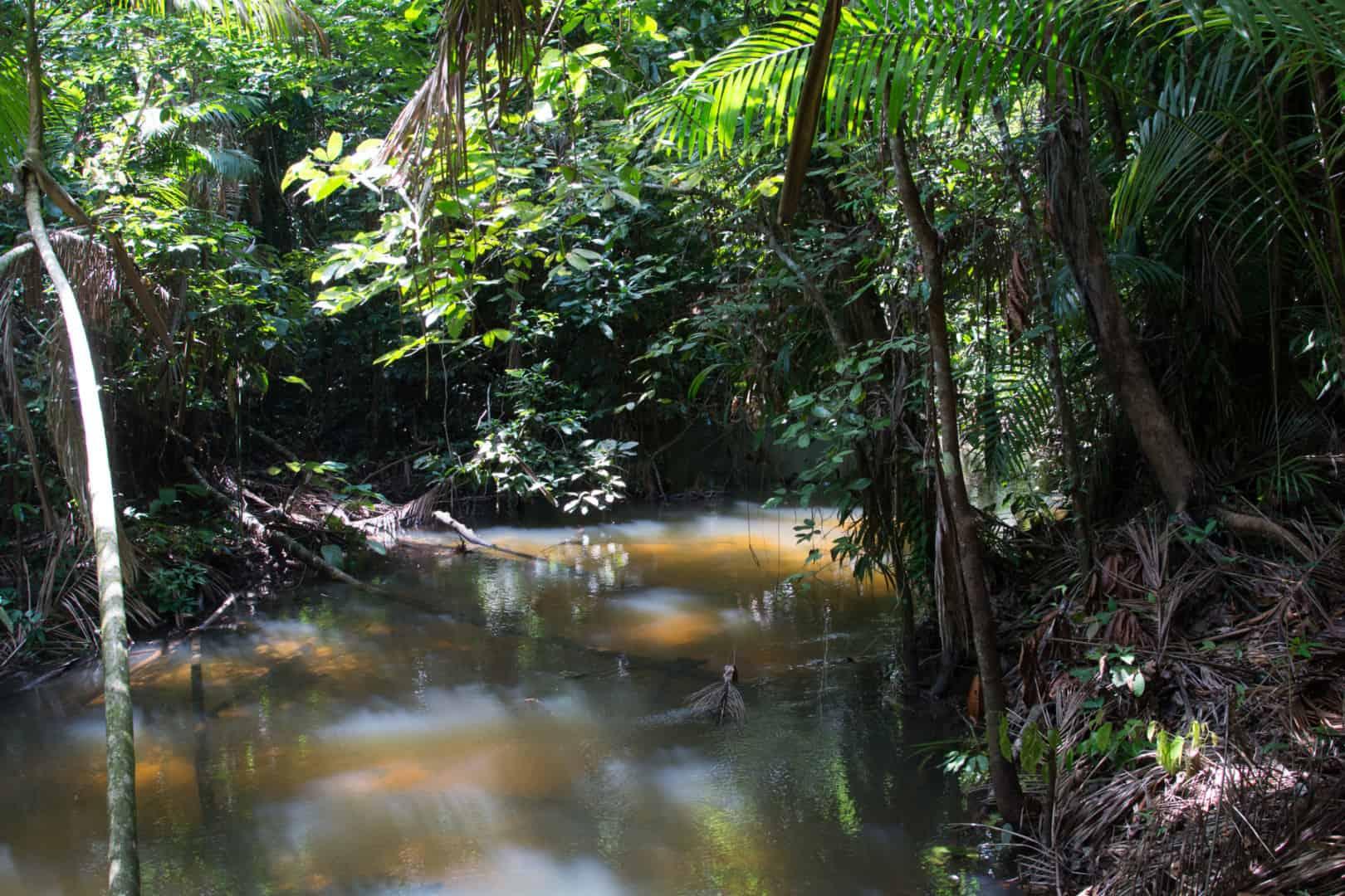 241: Zierfischimporte aus Brasilien - Nachhaltigkeit, Reproduktionsstrategien und Gefahren in der freien Natur (Dr. Stefan K. Hetz) 23