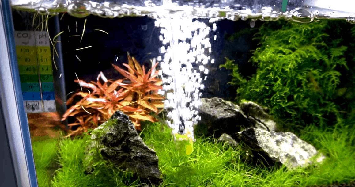 243: Achtung Sommerhitze im Aquarium - Wassertemperatur richtig kühlen 7