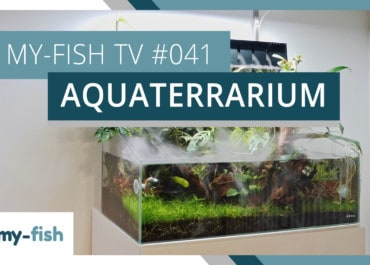 my-fish TV: Das Aquaterrarium