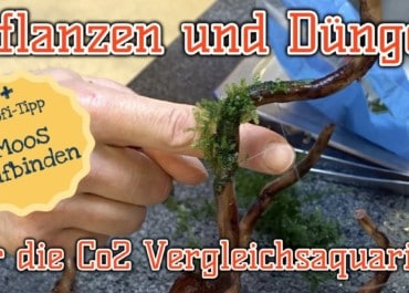 AQUaddicted! - Video Tipp: Pflanzen für das CO2 Vergleichsaquarium